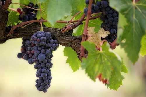 Weinkuehlschrank Luftfeuchtigkeit